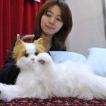 dream-cat-venus2